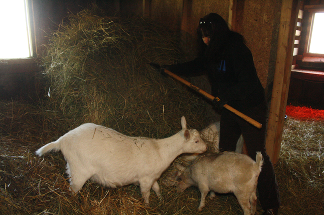 Goats are cheap to feed – $30-$40 in hay lasts 3-4 months.